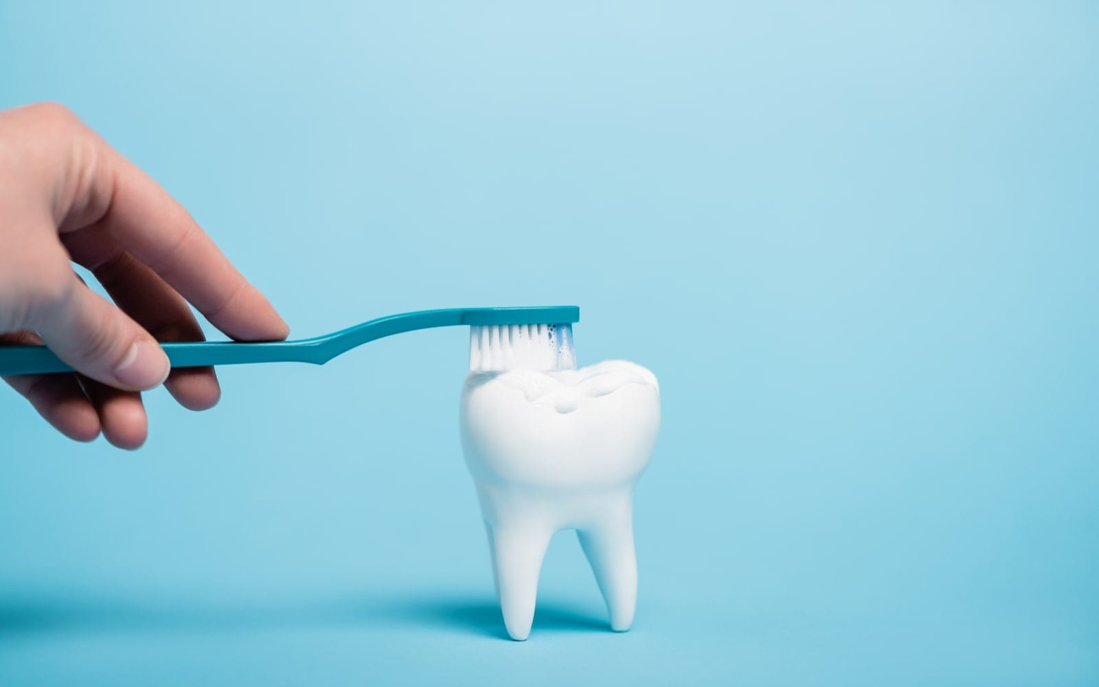 Model tooth being brushed
